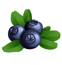 Ripe summer blueberry with leaves vector