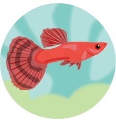 Guppy highly detailed vector