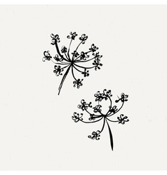 Set of milfoil or wet dandelion flowers vector