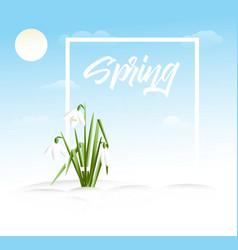 Spring grass background vector