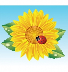 sunflower and red ladybird vector image