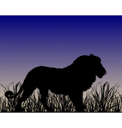 Dawn in savanna with lion vector
