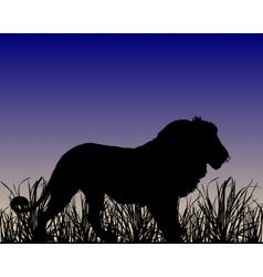 Dawn in savanna with lion vector