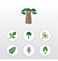 Flat icon bio set of acacia leaf foliage timber vector