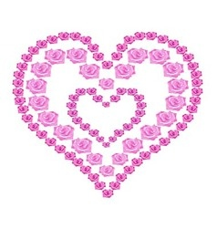 Heart of pink roses on white background vector