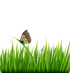 Nature background with green grass and a butterfly vector