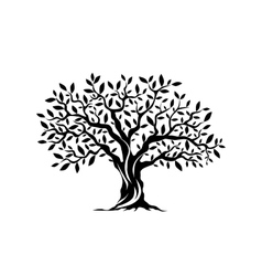 Olive tree silhouette icon isolated on white vector image vector image