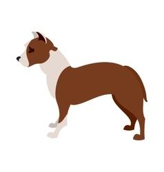 American pit bull terrier vector