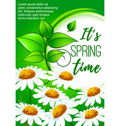 spring poster design with daisy flowers vector image