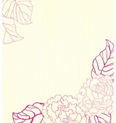 Peonies background vector