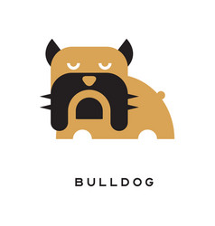 flat of bulldog with wrinkled vector image