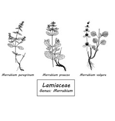 hand drawn set of botanical vector image