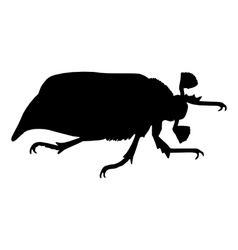 May beetle vector