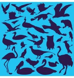 birds vector image