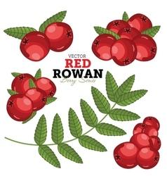 Rowan Set vector image vector image