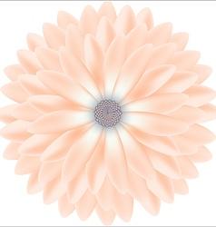 Tender chrysanthemum floral round realistic vector image