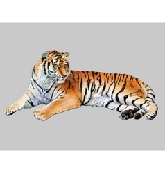drawing realistic of tiger vector image