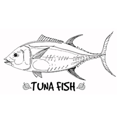Tuna fish doodle in lines on white background vector