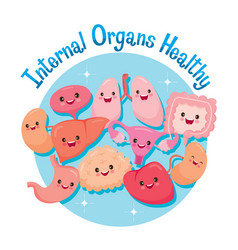 Human internal organs cartoon characters funny vector