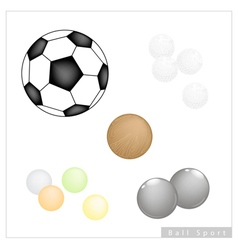 Set of different sport balls on white background vector
