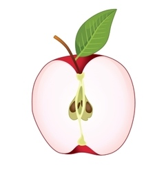 Cut red apple vector