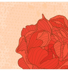 Macro peony card vector image vector image
