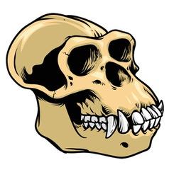 ape skull vector image