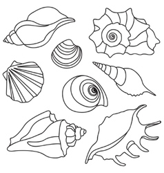Sea shells summer holidays design elements vector
