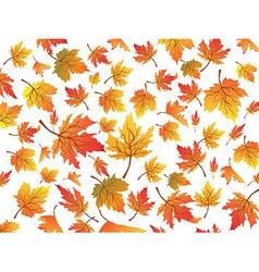 maples seamless background vector image vector image