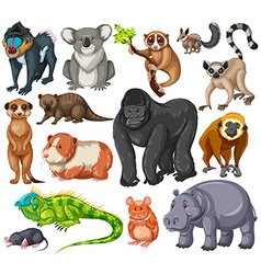 Different type of wildlife animals on white vector image