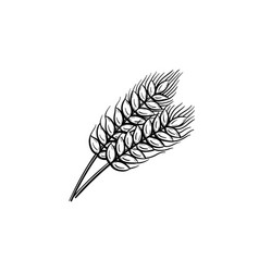 wheat hand drawn sketch icon vector image
