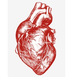 Human heart drawing line work vector