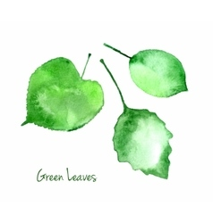 Set of green watercolor leaves for you eco vector