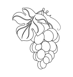 Bunch of yellow grapes icon in outline style vector image