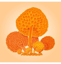 Orange mushrooms vector
