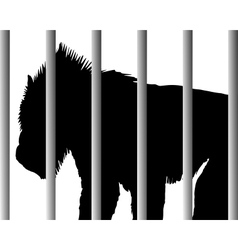 Mandrill in zoo vector