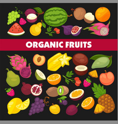 organic fruits and berries harvest poster of fresh vector image
