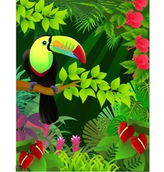 Toucan bird vector