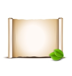 Old scroll and green leaves isolated on white vector