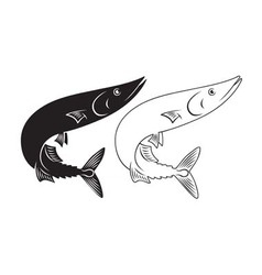 saury vector image