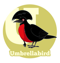 Abc cartoon umbrellabird vector