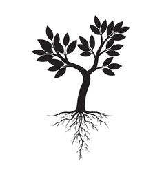 black apple tree and roots vector image vector image