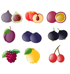 different types of tropical fruits vector image