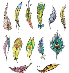 Motley feathers vector
