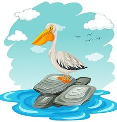 Pelican bird standing on rocks vector image