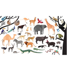 Collection of exotic animals and birds living in vector