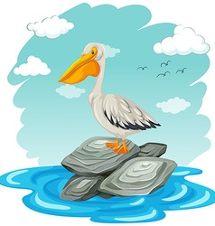 Pelican bird standing on rocks vector image