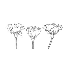 Beautiful black and white rose isolated on vector