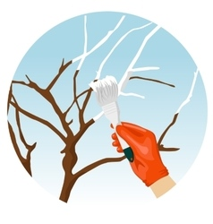 Whitewashing of trees in the spring in garden vector image vector image