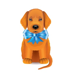 Puppy blue bow vector